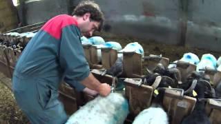 Transhumance des brebis à Larrau 2012 (première partie)