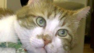 外国人で侍ファンの人っていますよね! うちの猫も日本の歴史,侍が好き...
