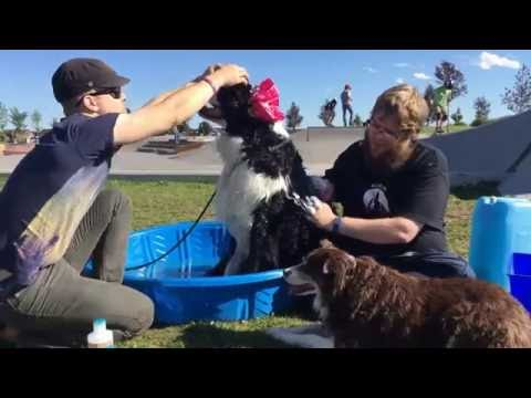 19 - Just another day at the dog Spa