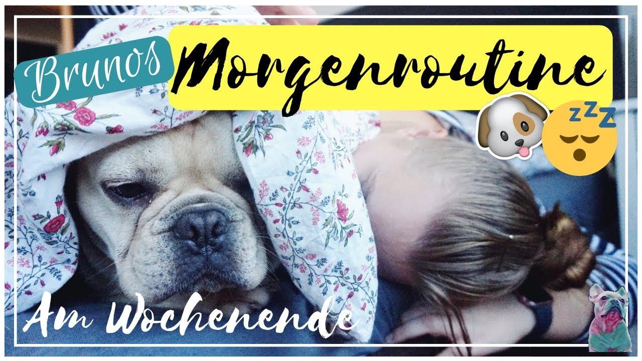 Brunos Morgenroutine Hund Französische Bulldogge Haustier Get Ready