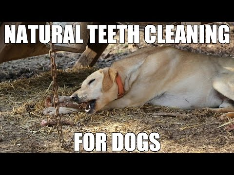 Feeding Your Dog Raw Uncooked Bones | Natural Teeth Cleaning