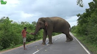 Hungry elephant wants everyone to feed him to pass the road