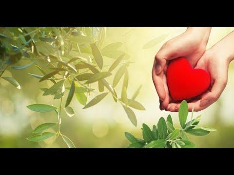 estratto-di-foglie-di-ulivo-infuso-integratore-alimentare-naturale-con-curcuma-e-rosmarino