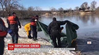 Пожежники допомогли маленькому оленю вибратися із крижаного озера