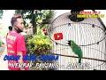 Perform Dengan Sangkar Bulat Cucak Hijau Ini Nembak Panjang Panjang  Mp3 - Mp4 Download