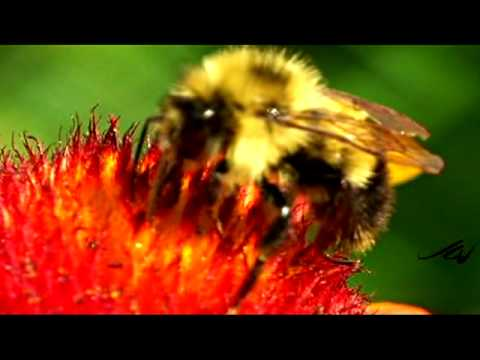 BEE'S....MILLION YEARS OF EVOLUTION