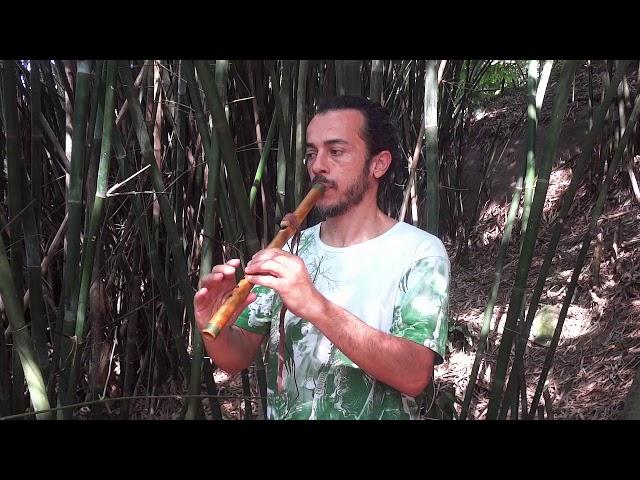 Flauta Nativa River Cane C