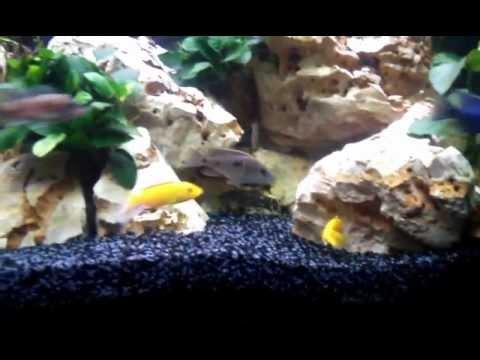 Malawi aquarium 350 liter eckaquarium doovi for Aquarium 350 litres