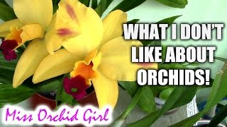 Biggest pet peeves with growing orchids - Casual Sundays