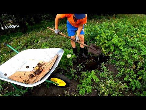 Доделал опалубку / сбор урожая картофеля и лука .  влоги из деревни.
