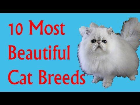10 MOST BEAUTIFUL CAT BREEDS