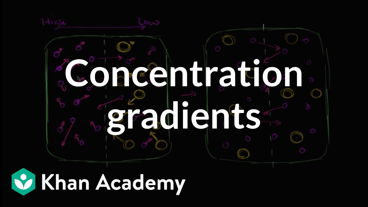 Concentration gradients (video) | Khan Academy