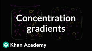 Concentration Gradients