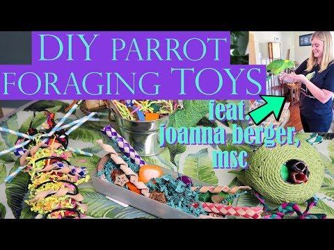 DIY PARROT FORAGING TOYS   Feat. Joanna Berger, MSc