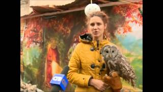 Выпуск от 2.10.14 Хищные птицы - Стерлитамакское телевидение