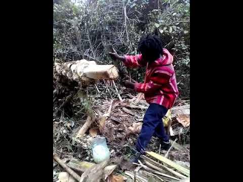 Samy recueille du vin de palme