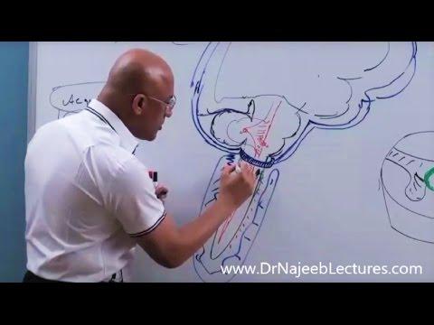 Syringomyelia - Symptoms, Diagnosis and Management.
