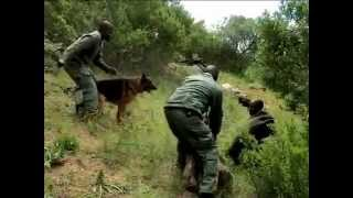Table Mountain Canine Unit With K9 Training - On Expresso