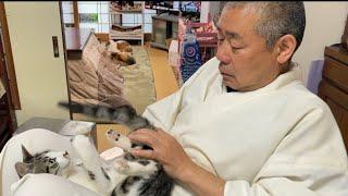 猫も可愛いけど住職が1番可愛いんじゃないか説。