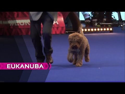 European Dog Show 2014 | Day 3
