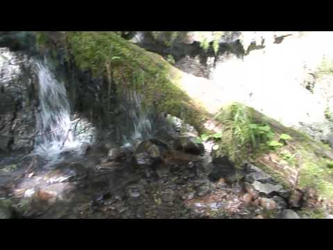 Chill-out to 5 minutes of a waterfall in Forest Park,Portland, Oregon