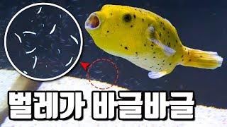 удалены тысячи морских червей