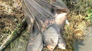 Chộm Cá Cha Vợ Trúng Ổ Cá Khủng. Minh bẫy rắn #78