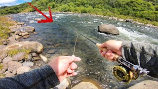 Lockdown Fishing | Tough Trout in Awesome water!!