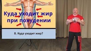 8.  Куда уходит жир?