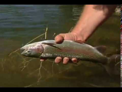NYMPHS & REDSIDES Deschutes River