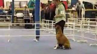 St. Paul Dog Obedience Trial