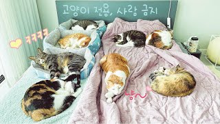 What do cats do in their owners' beds all day?