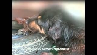 Cão agredido comove moradores de bairro paulista/SP