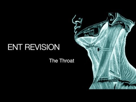 Download ENT Revision - The Throat