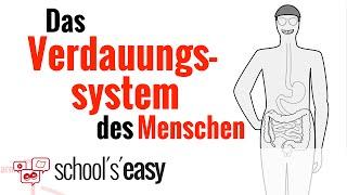 Verdauungssystem - Wie funktioniert's?