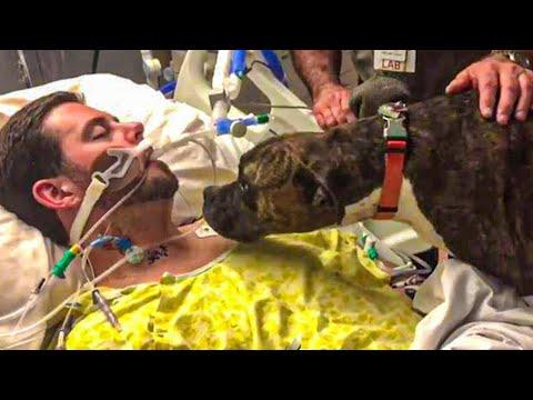 O Momento em que Este Cachorro diz Adeus ao seu Dono é Emocionante