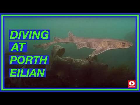 Diving At Llaneilian | Diving North Wales | Shore Dive At Porth Eilian, Anglesey