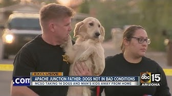 14 dogs removed from home near Apache Junction, suspect disagrees with MCSO