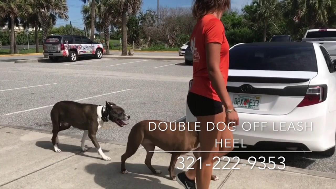 Free Dog Training Melbourne