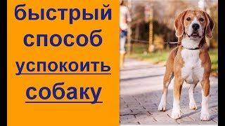 Как быстро успокоить собаку  Быстрый способ