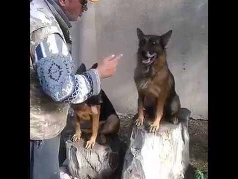 ძაღლი ამბობს შალვას - talking dog say shalva - собака завёт хозяйна
