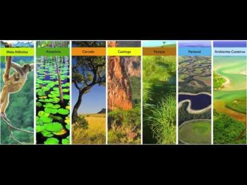 Biomas do Brasil IB-USP - YouTube