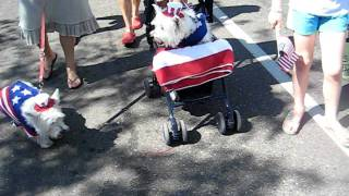 Westie Parade In Wayzata, Mn Sept. 11, 2011