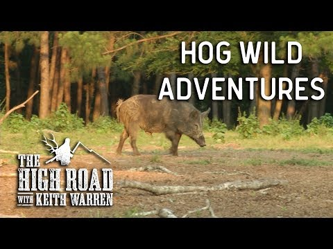Hog Wild | The High Road with Keith Warren