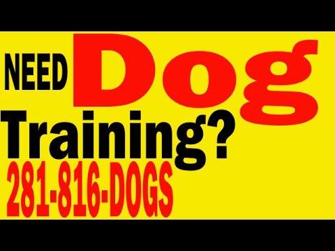 dog-training|-therapy-dog-training|-service-dog-training|-search-rescue-dog-training|houston-tx