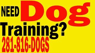 Dog Training| Therapy Dog Training| Service Dog Training| Search Rescue Dog Training|houston Tx