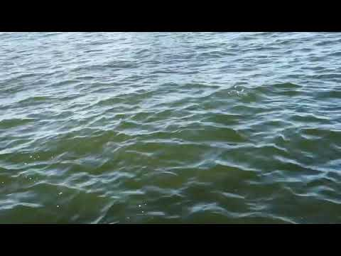 Bull Redfish Attempts To Eat A 16 Inch Speckled Trout Off Of Hook