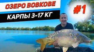 Озеро Вовкове Ловля карпа от 3 до 17 кг Часть 1