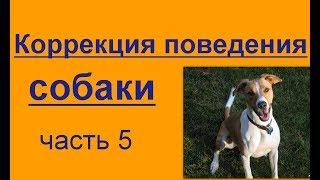 коррекция поведения собаки. часть 5