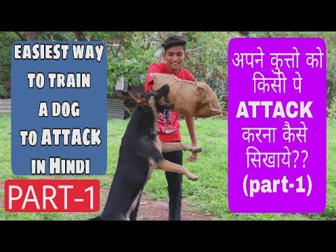 How to train a dog to attack on command in Hindi(Part-1)| Dog training|